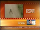 Олег Трэшер нашел скорпиона в китайском салате!